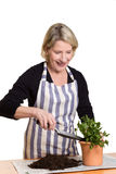 Donna con la pianta, vaso, pala, suolo Immagini Stock