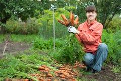 Donna con la raccolta della carota Immagini Stock Libere da Diritti