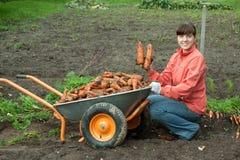 Donna con la raccolta della carota Fotografia Stock Libera da Diritti