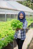 Donna con lattuga che sta nell'azienda agricola hydropohonic Immagine Stock