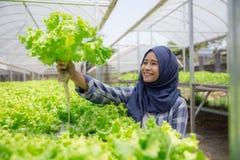 Donna con lattuga che sta nell'azienda agricola hydropohonic Immagine Stock Libera da Diritti