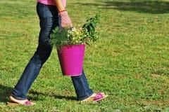 Donna con le erbe Immagine Stock