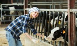 Donna con le mucche all'azienda agricola fotografia stock libera da diritti