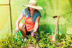 Donna con lo strumento di giardinaggio che funziona nella serra Immagini Stock
