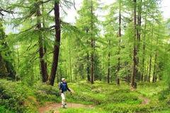 Donna con lo zaino in una foresta Fotografie Stock