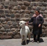 Donna con un'alpaga nella plaza Cusco Perù Fotografie Stock