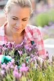 Donna del Garden Center con il fiore porpora della pianta Fotografia Stock