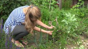 Donna del giardiniere che seleziona uva spina verde organica fresca 4K archivi video