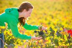 Donna dell'agricoltore in autunno del raccolto della vigna nel Mediterraneo Fotografie Stock Libere da Diritti