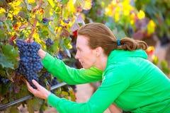 Donna dell'agricoltore in autunno del raccolto della vigna nel Mediterraneo Fotografie Stock