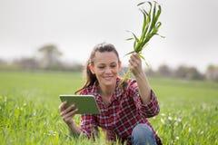 Donna dell'agricoltore che controlla crescita del grano nel campo Fotografie Stock