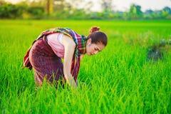 Donna dell'agricoltore che lavora nel giacimento del riso Fotografia Stock Libera da Diritti