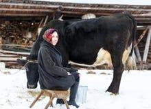 Donna dell'agricoltore che munge una mucca nell'iarda di inverno Fotografie Stock Libere da Diritti