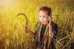 Donna dell'agricoltore che rivolge al telefono cellulare in un giacimento del riso Fotografia Stock Libera da Diritti