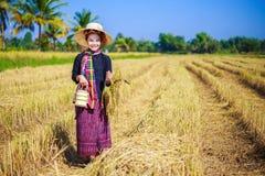 Donna dell'agricoltore con il trasportatore del tiffin nel giacimento del riso Fotografia Stock Libera da Diritti