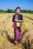 Donna dell'agricoltore con il trasportatore del tiffin nel giacimento del riso Fotografie Stock