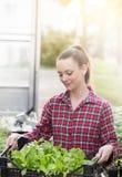 Donna dell'agricoltore con le piantine in serra Fotografia Stock Libera da Diritti