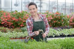 Donna dell'agricoltore con lo strumento di giardinaggio che funziona nella serra del giardino Fotografie Stock