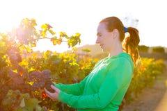 Donna dell'agricoltore in foglie di autunno del raccolto della vigna nel Mediterraneo Fotografia Stock