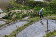 Donna dell'agricoltore in Maruyama Fotografie Stock