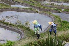 Donna dell'agricoltore in Maruyama Immagine Stock