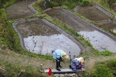 Donna dell'agricoltore in Maruyama Fotografia Stock