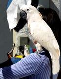Donna dell'uccello Immagine Stock