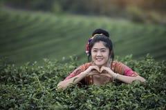 Donna della tribù che raccoglie tè nell'azienda agricola in rurale immagini stock libere da diritti