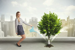 Donna di affari che innaffia albero verde sul fondo della città Fotografia Stock