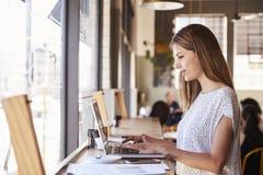 Donna di affari By Window Working sul computer portatile in caffetteria fotografia stock libera da diritti