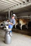 Donna di Amish che versa latte crudo tramite un filtro Fotografia Stock Libera da Diritti