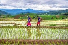 Donna di Hmong con il fondo del terrazzo del giacimento del riso Immagini Stock