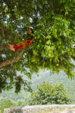 Donna di Sindhupalchowk, Nepal fotografia stock