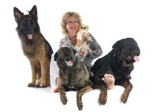 Donna e cani Immagini Stock Libere da Diritti