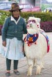 Donna e lama indiane indigene tradizionali di divertimento in Huaraz, Perù Fotografie Stock Libere da Diritti