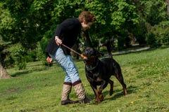 Donna e Rottweiler che giocano al parco fotografie stock libere da diritti