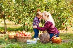 Donna e una ragazza al frutteto immagine stock libera da diritti