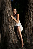 Donna ed albero Immagini Stock