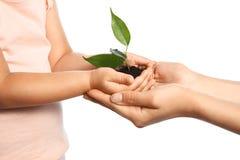 Donna ed il suo suolo della tenuta del bambino con la pianta verde Immagini Stock Libere da Diritti