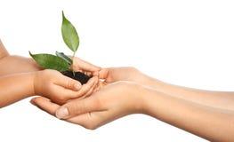 Donna ed il suo suolo della tenuta del bambino con la pianta verde Fotografie Stock