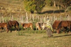 Donna etiopica dell'azienda agricola Fotografia Stock