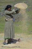 Donna etiopica lavorante 2 Fotografia Stock Libera da Diritti