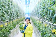 Donna felice alla piantagione di verdure Fotografia Stock