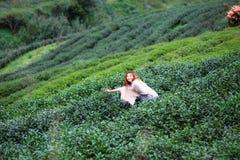 Donna felice dell'Asia che raccoglie le foglie di tè sulla montagna del angkhang di doi Fotografia Stock Libera da Diritti