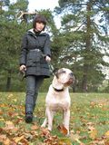 Donna giovane e forte cane fotografia stock