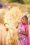 Donna in grano del raccolto dell'India fotografie stock