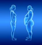 Donna grassa e sottile Fotografia Stock
