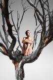 Donna graziosa che si siede sull'albero Fotografia Stock