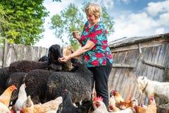 Donna il suoi allevamento di pecore, animali e natura Immagine Stock