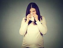 Donna incinta che starnutisce avendo freddo che soffia naso semiliquido fotografie stock